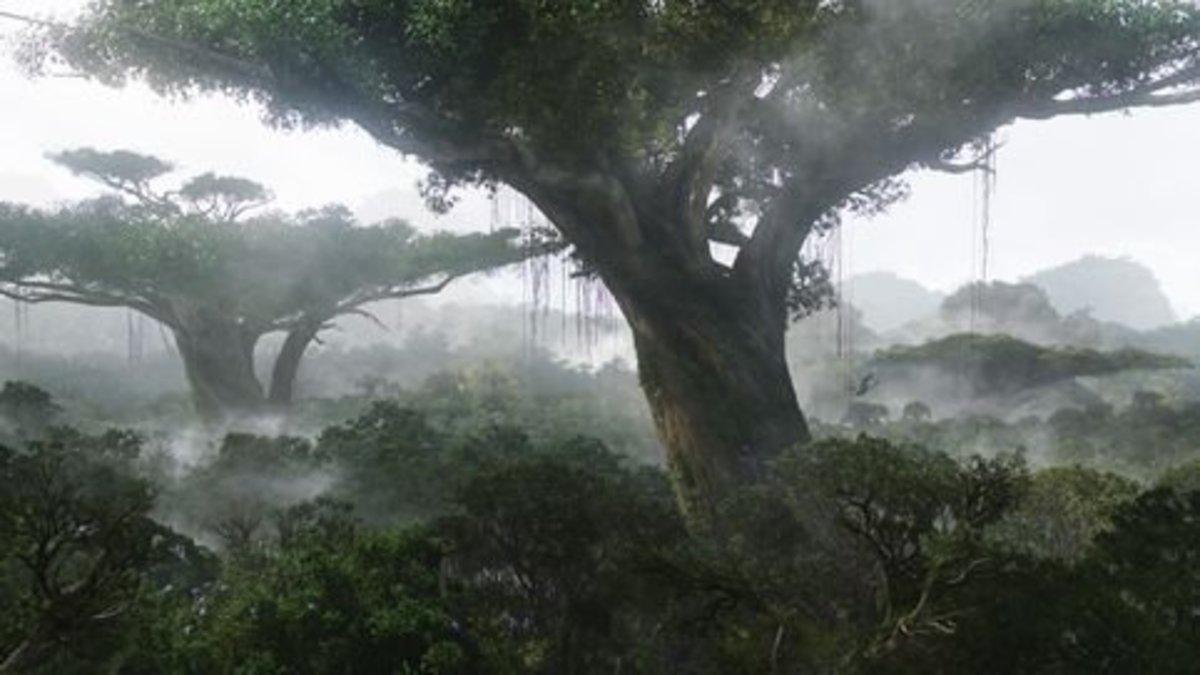 Trees of Pandora