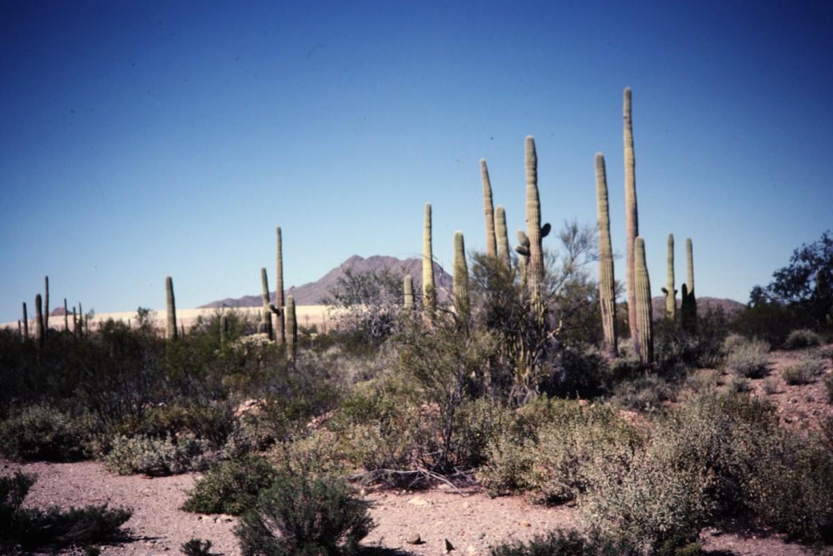 Sonoran Desert surrounding Mission San Xavier del Bac