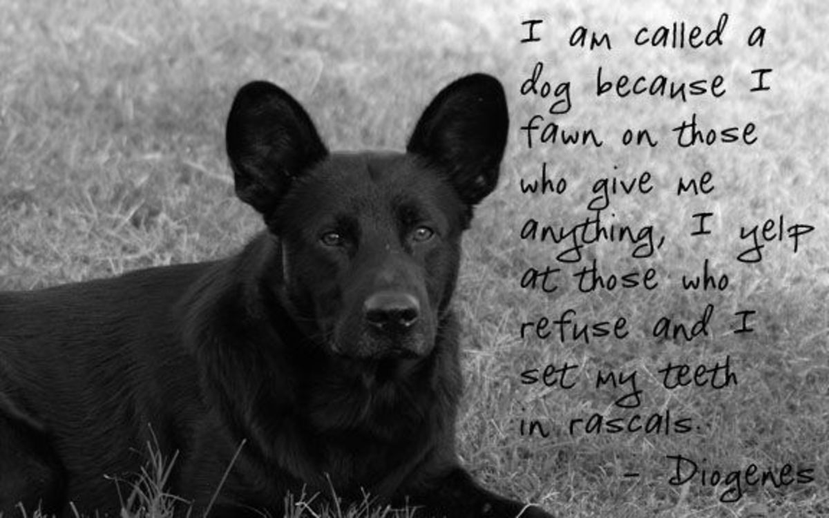 dog-quotes-on-photo-1