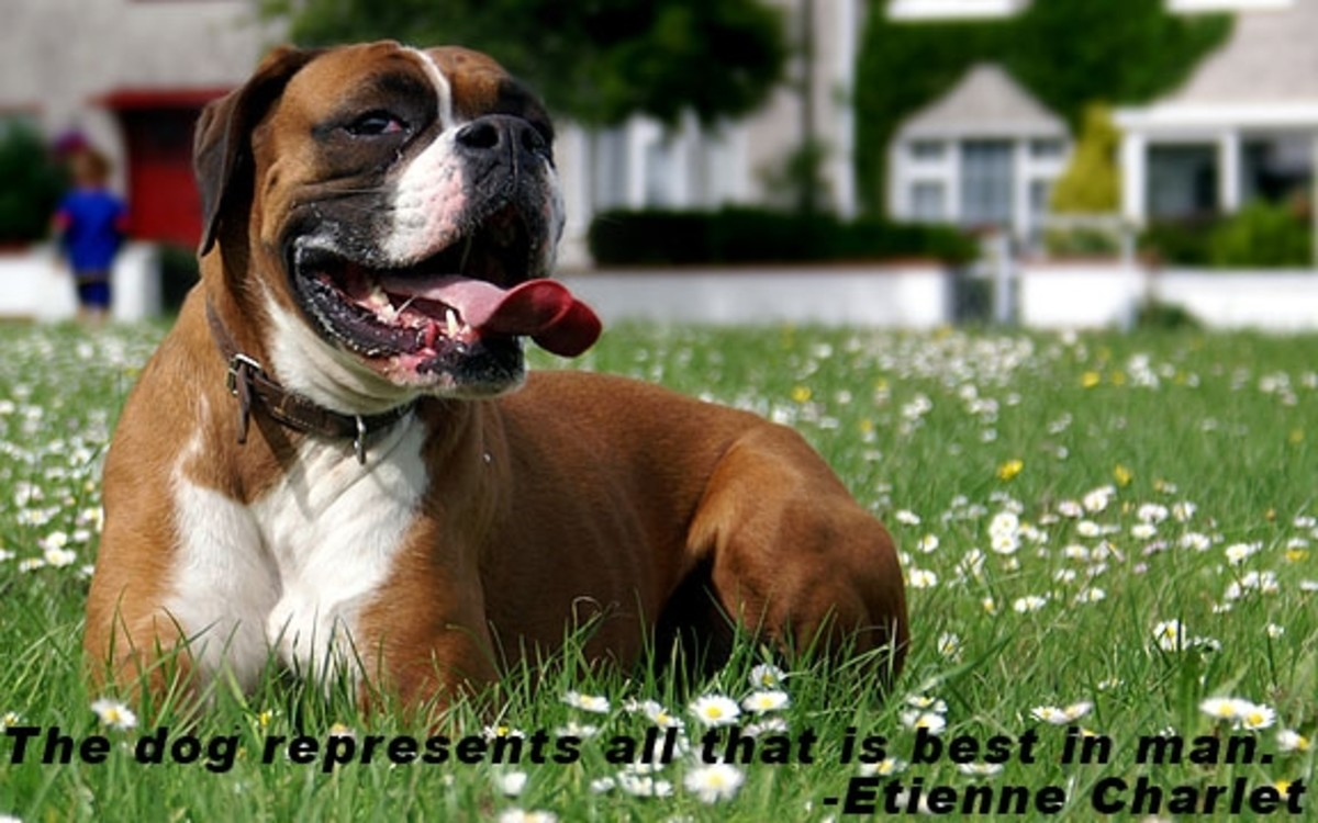 quotes-about-dogs-on-photo