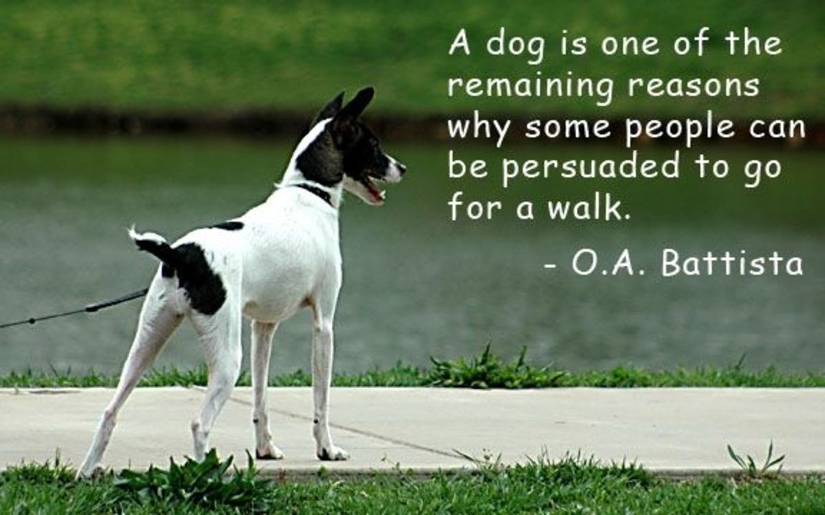 dog-quotes-on-photo