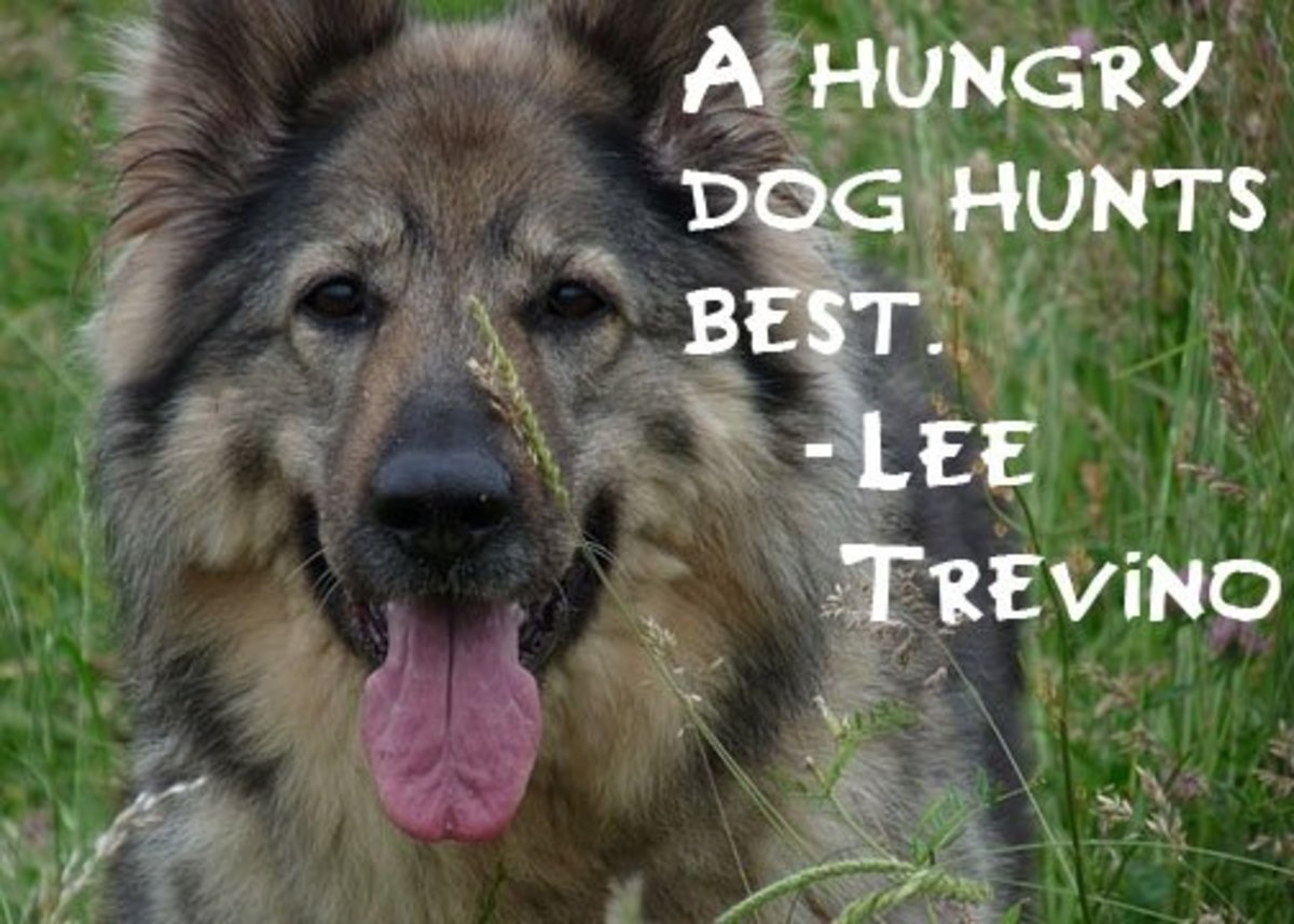 quotes-on-dogs-pictures