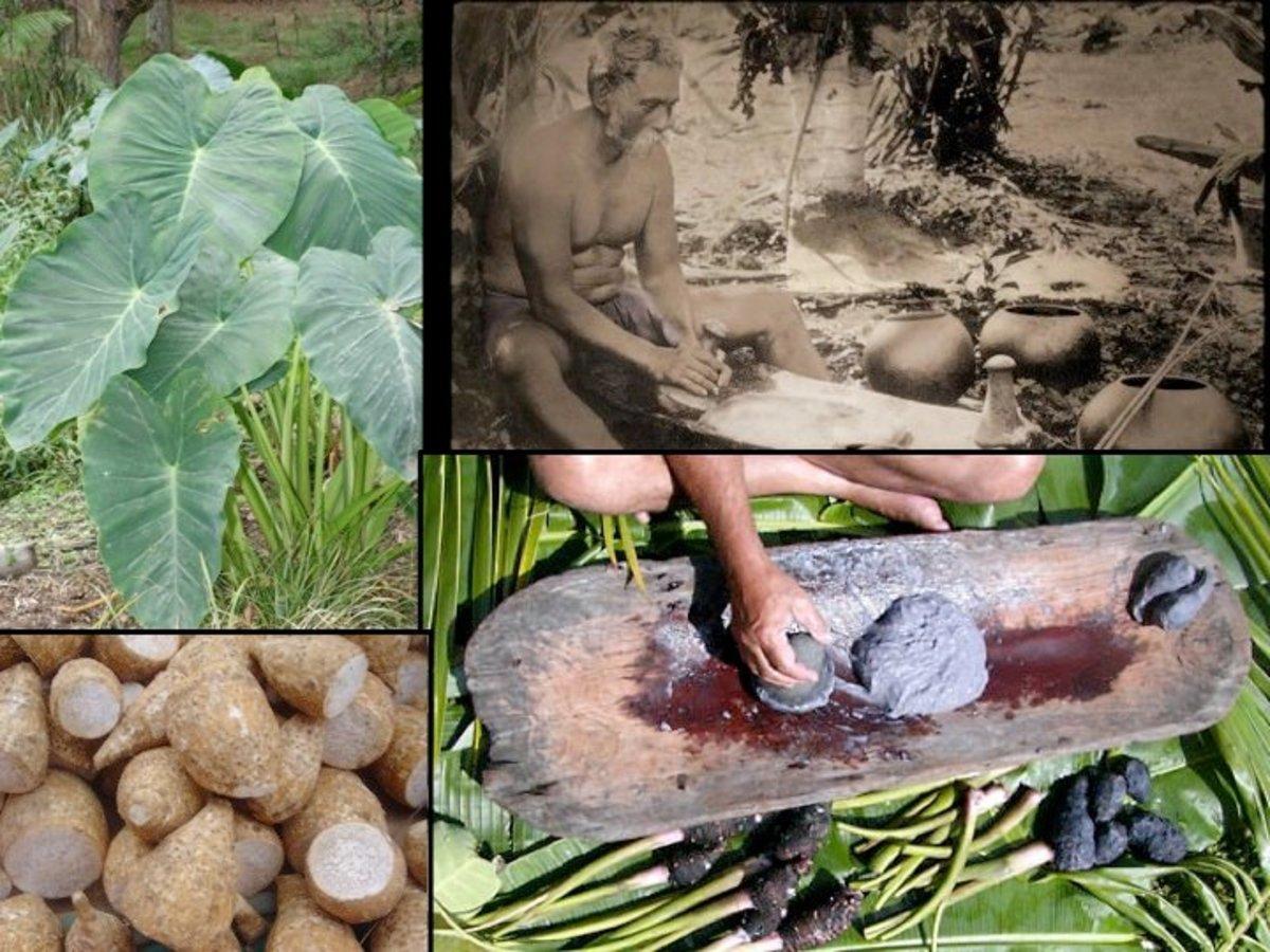 Ancient Hawaiian foods. Pounding the taro to make poi (bottom right).
