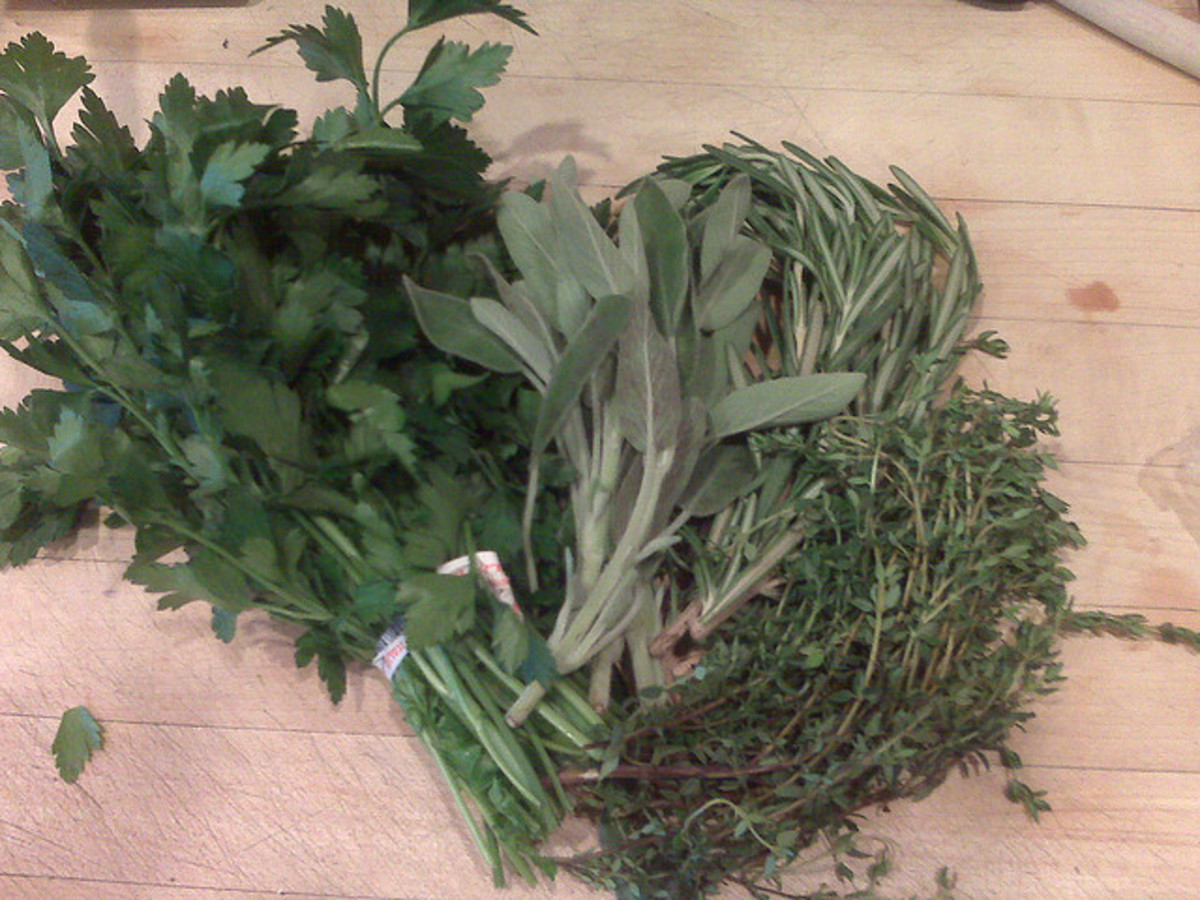 Parsley, Sage, Rosemary, and Thyme are Popular Herbs for Roasting a Turkey