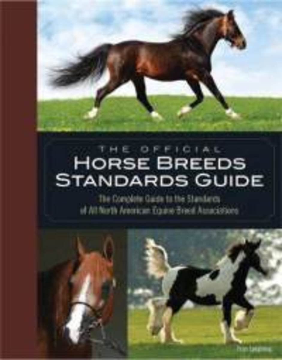 Types and Breeds of Horse