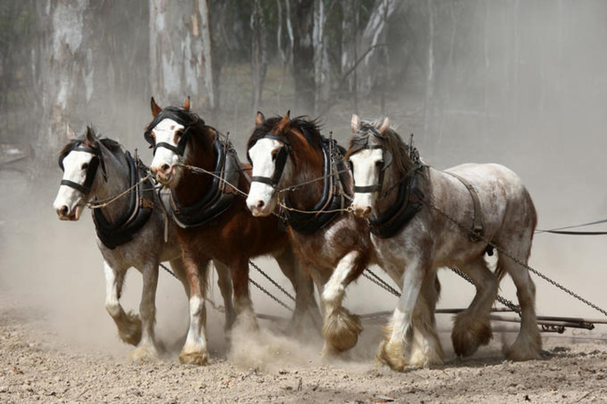 Team of Working Horses