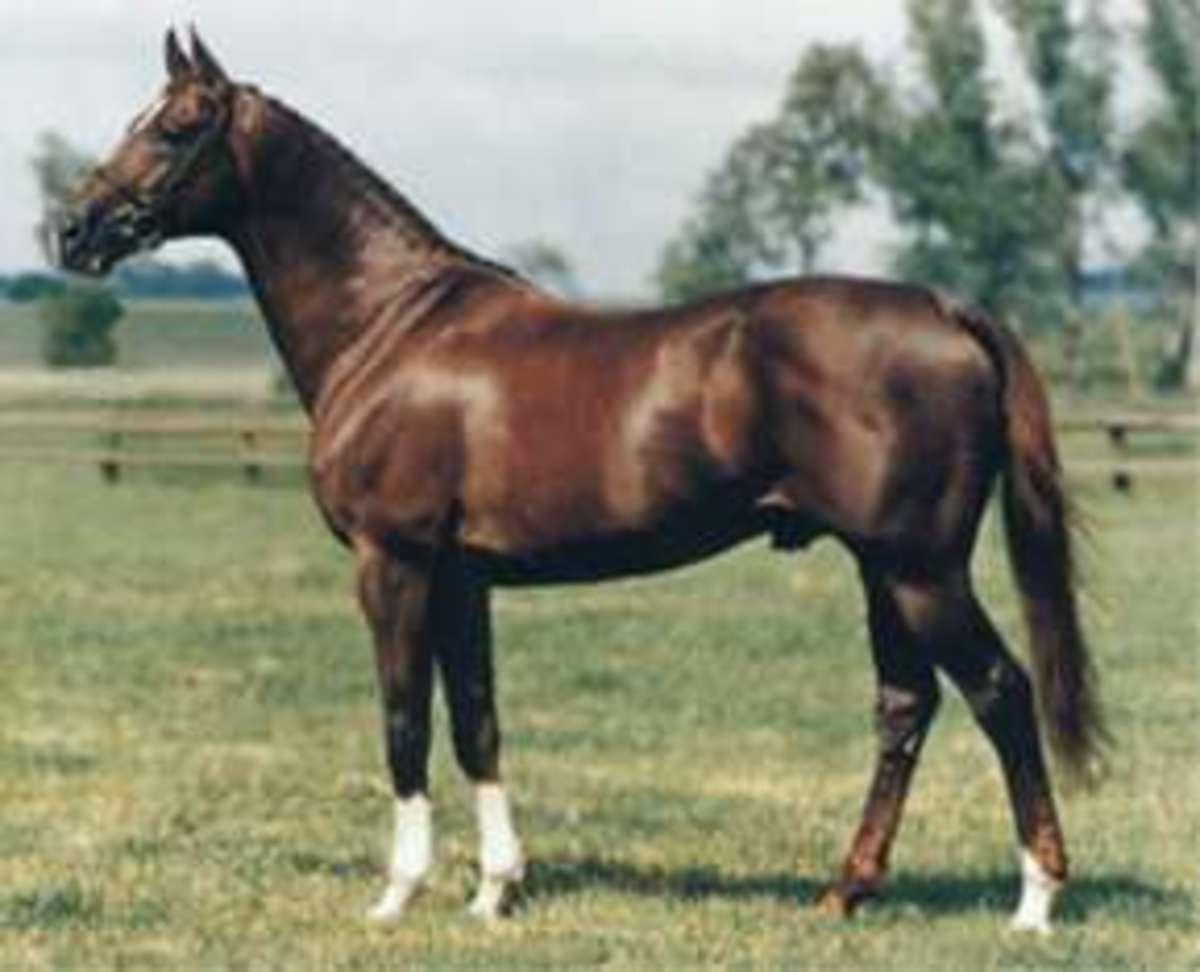 An Arab Horse