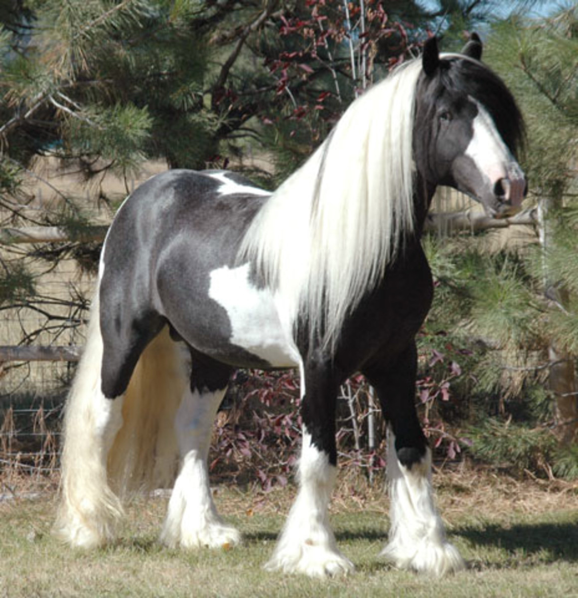 types-and-breeds-of-horse