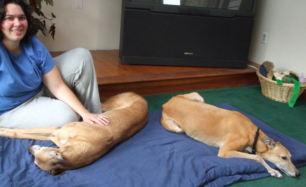 Jennifer DeLong with Red and Lucy, two rescued greyhound racers, now retired.