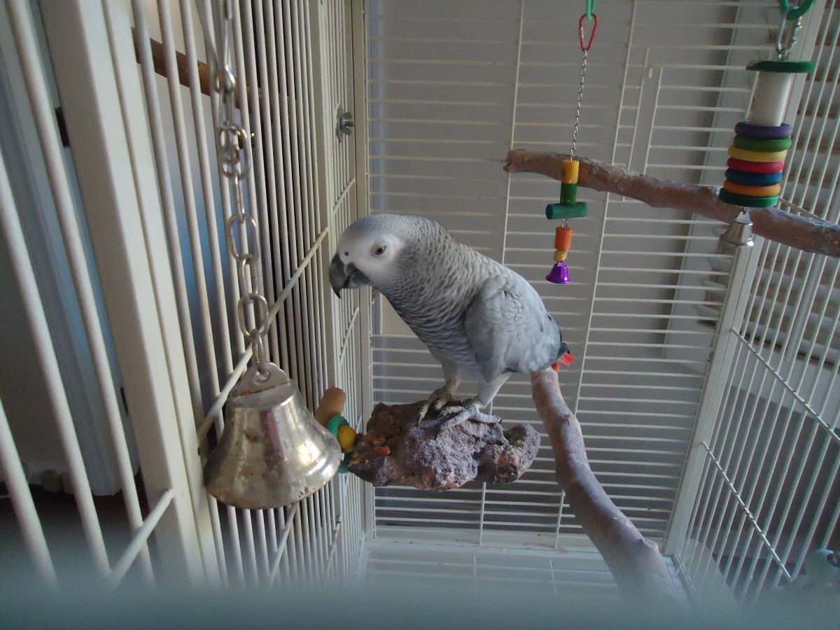 why-birds-make-terrible-pets