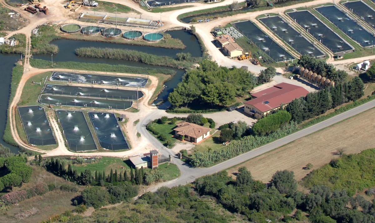 A fish farm 'Il Vigneto' where it has always been in MAremma