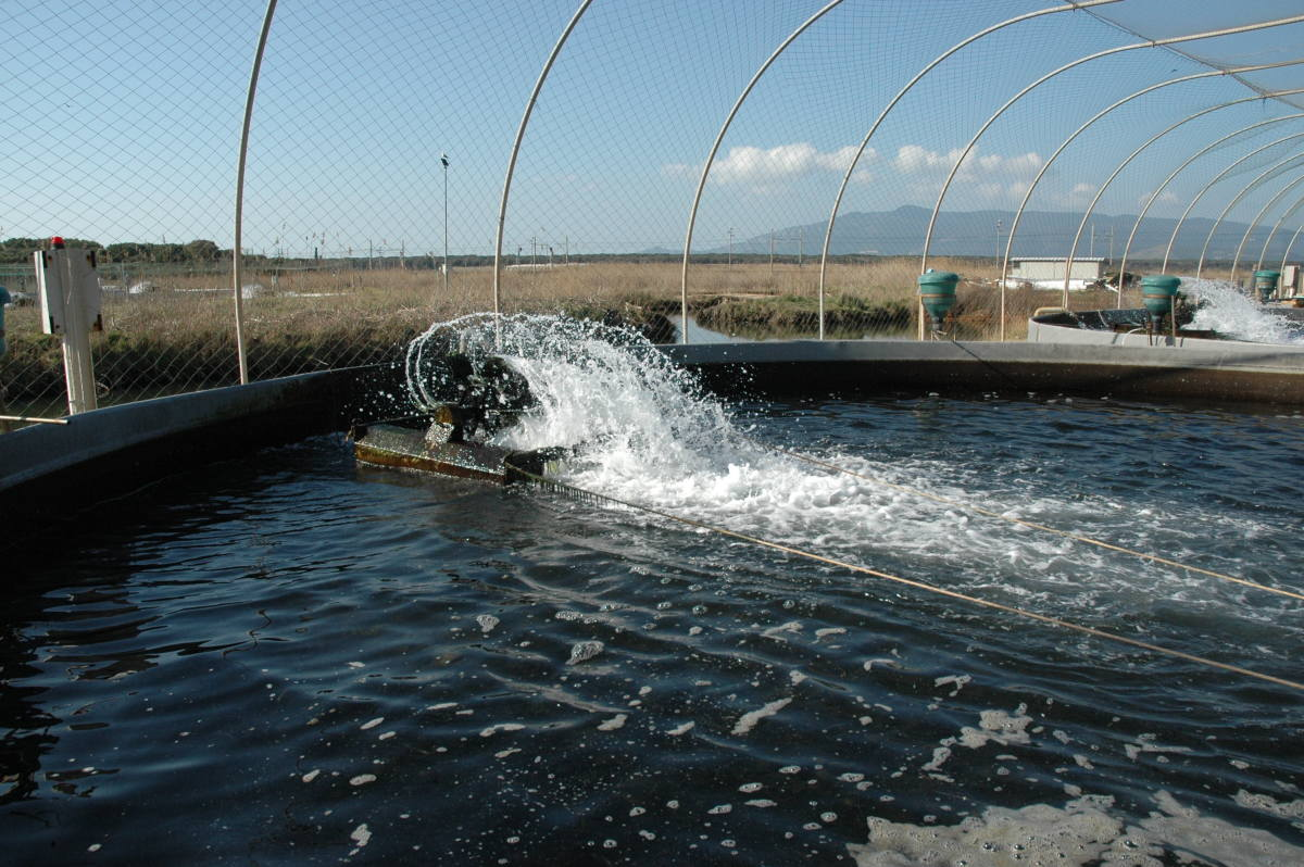 Water pumping in one of the tanks