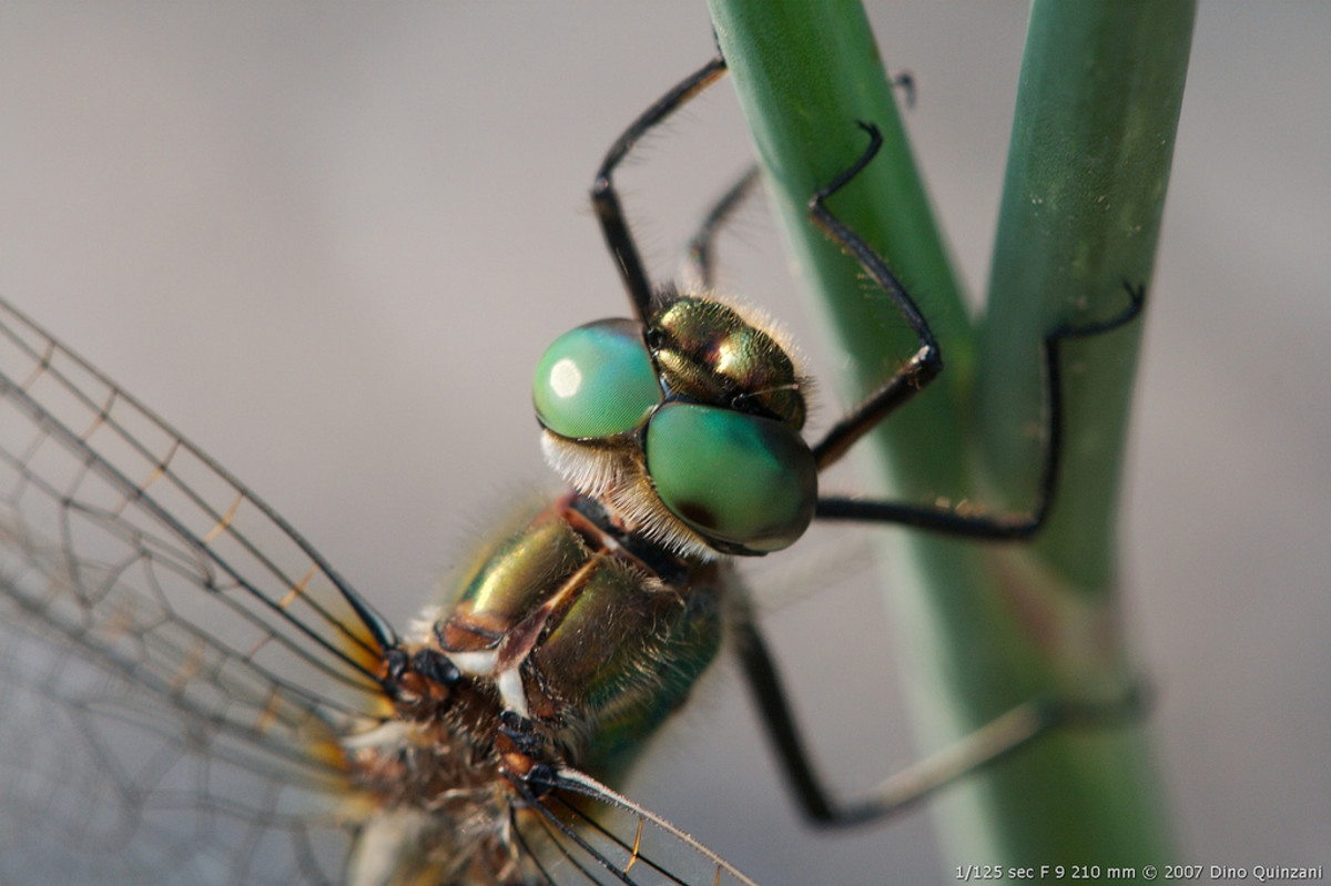 Stunning Green Eyes - Click on the image to display a larger image.