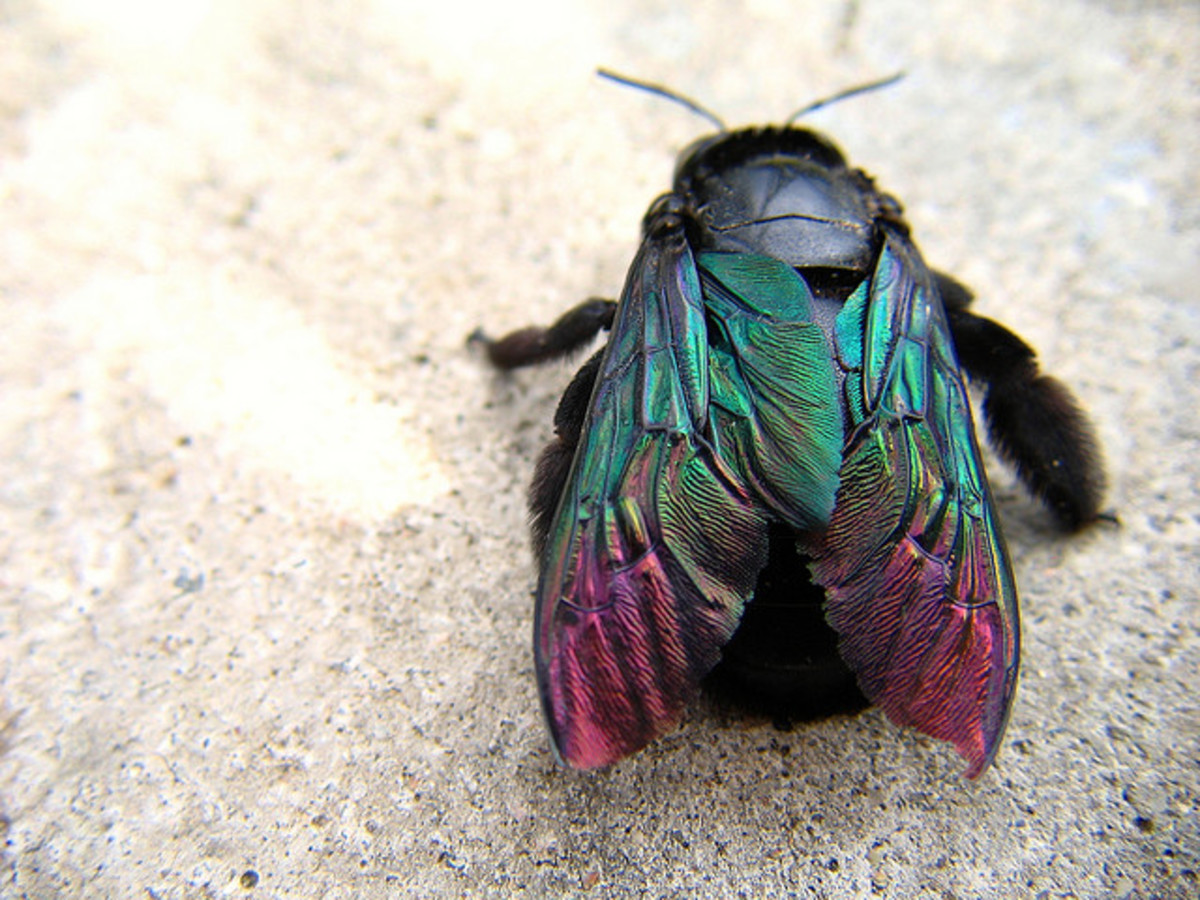 64 Macrophotography / Microphotography of Flying Insects or Bugs ~ Images of Flying Insects or Bugs