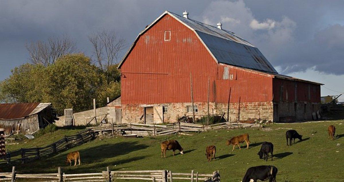 My Farm Life Experience