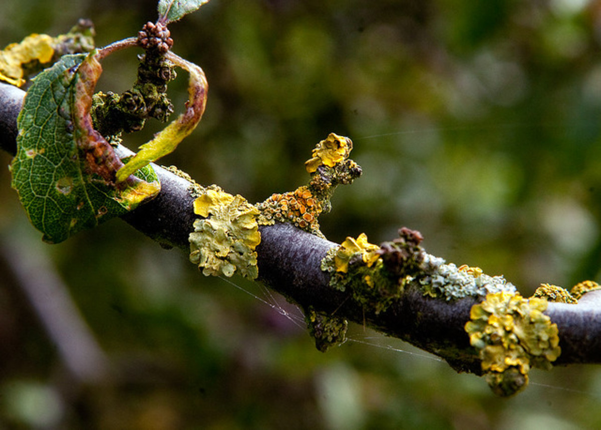 Look closely at the delicate nature of this lichen and the spider webs that share its space.