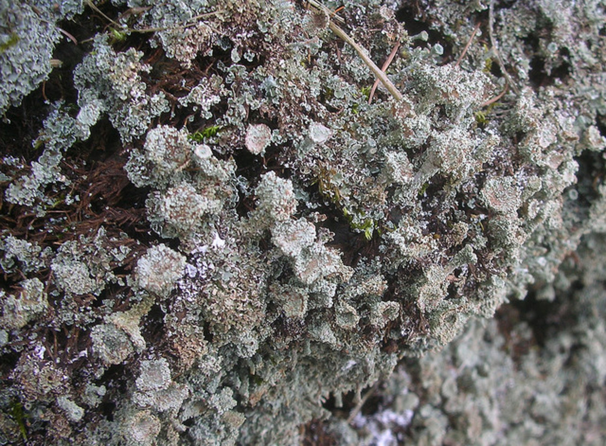 Layers of different types of lichen create a very interesting look.