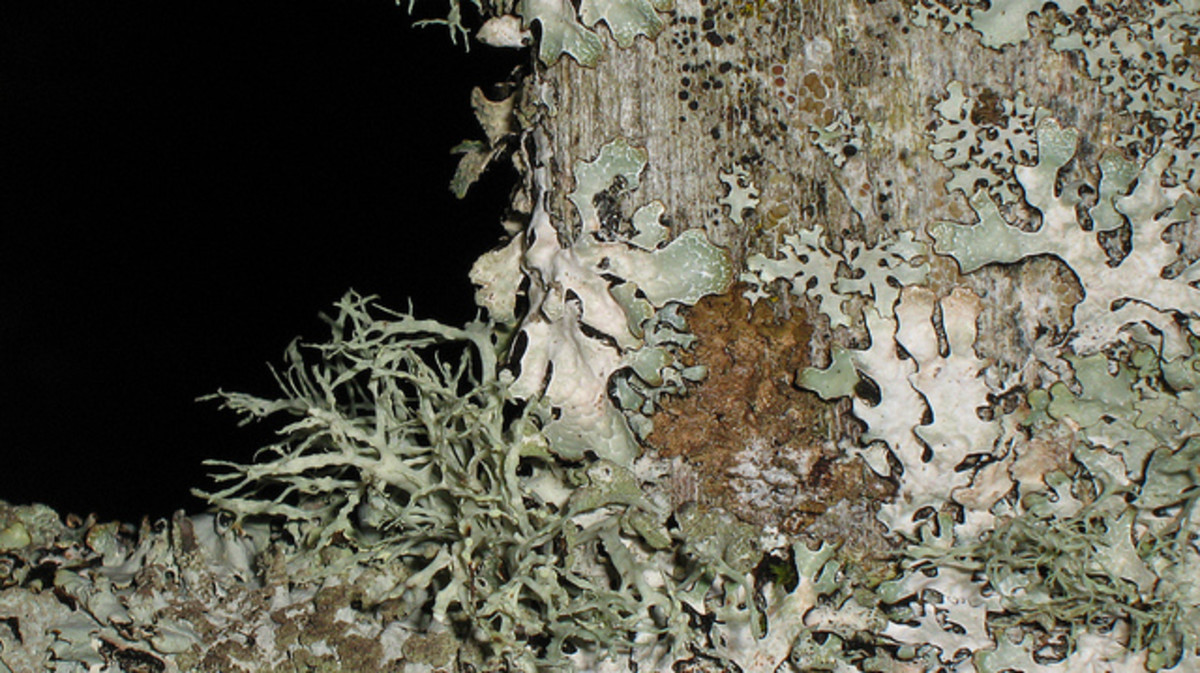 Lichen on a wooden bench.