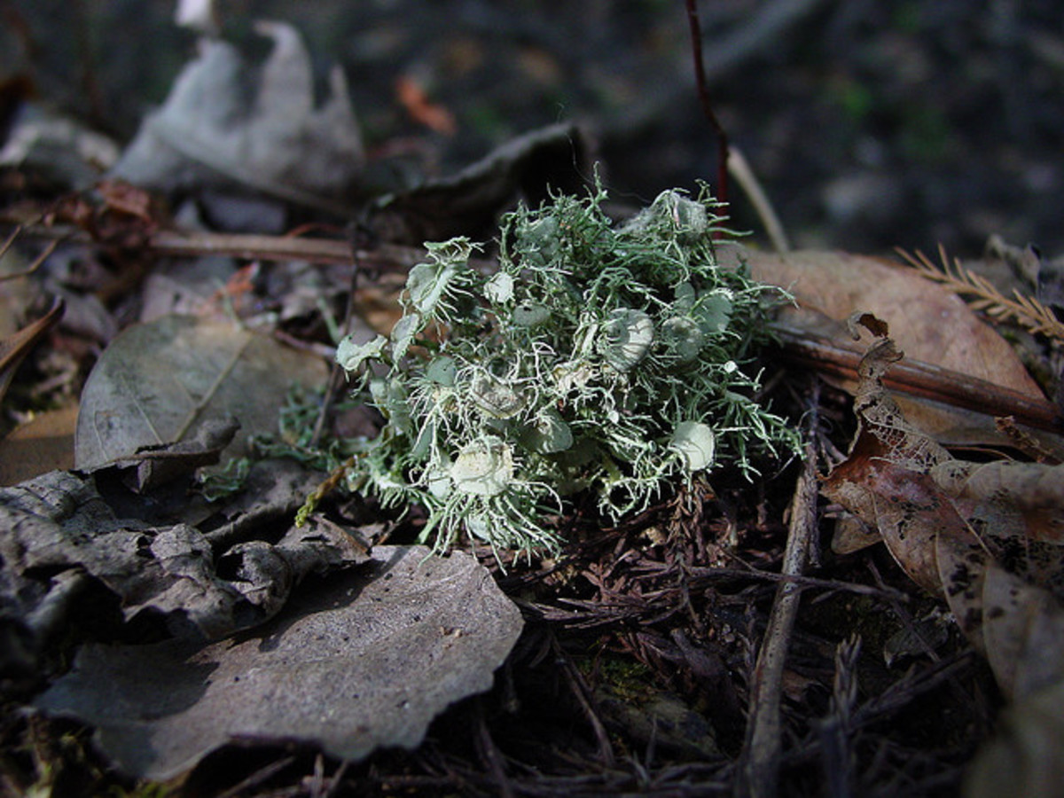 This lichen almost looks like flowers.