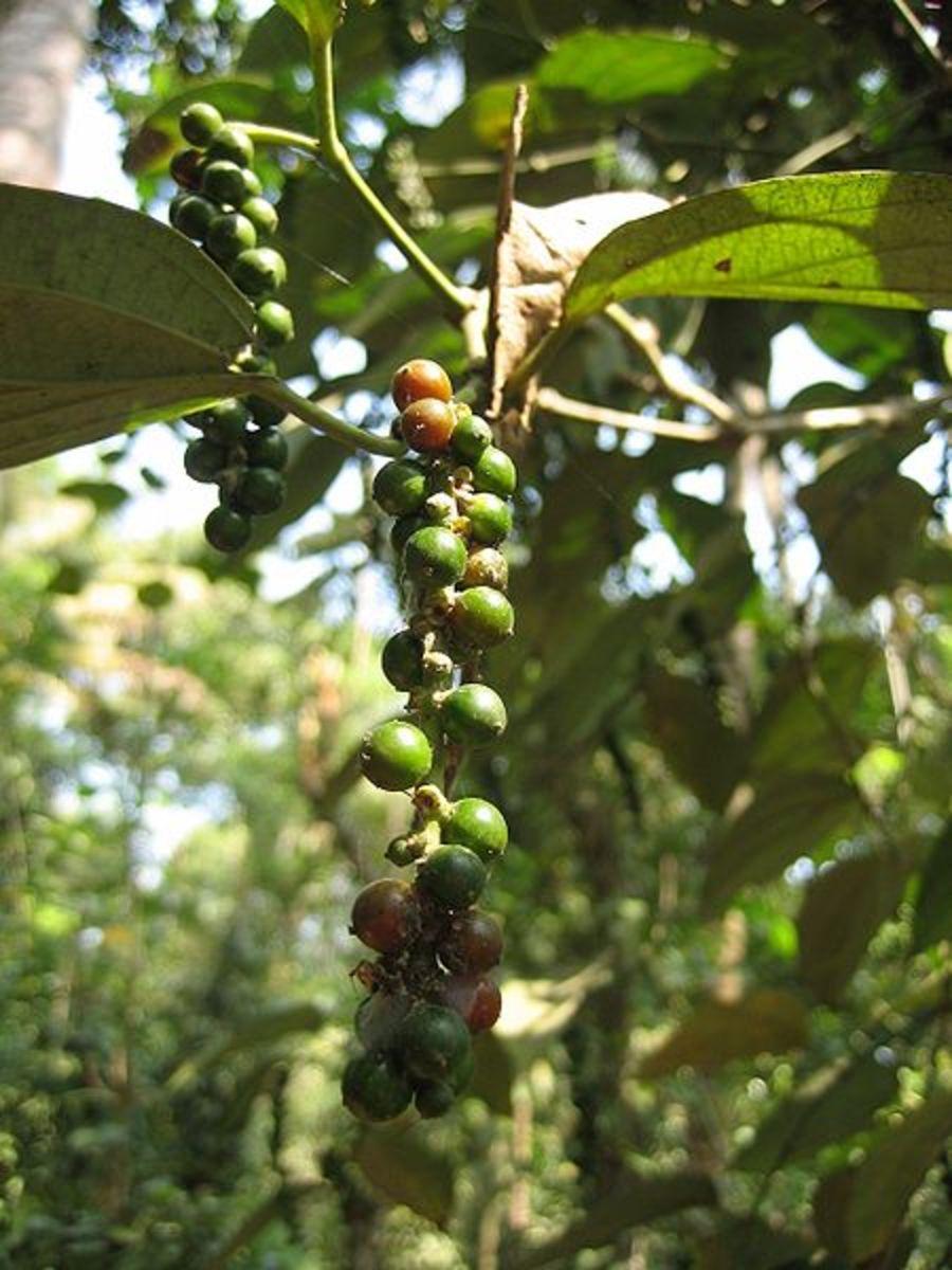 benefits-of-black-pepper