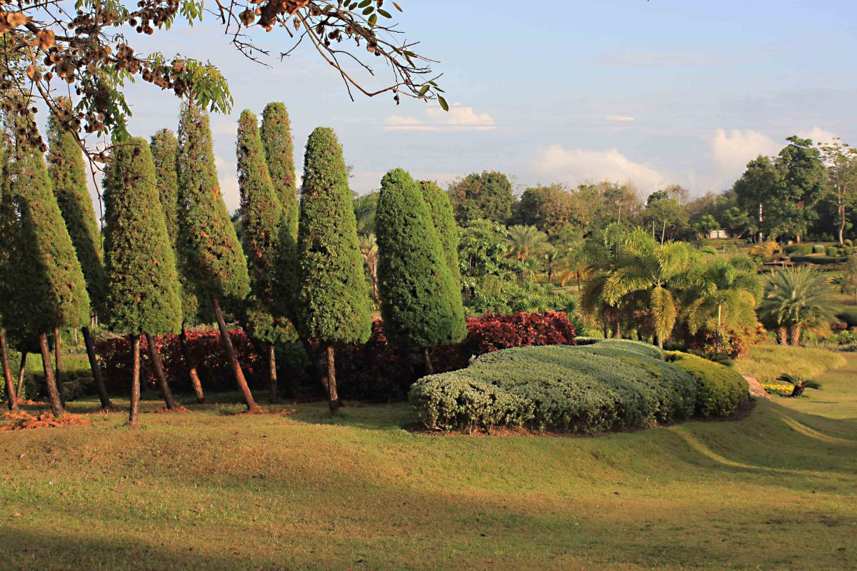 Trees and shrubs in the garden