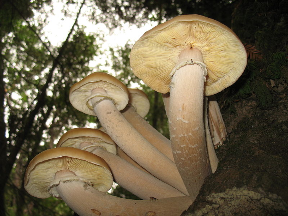 Mushrooms are in the Fungi Kingdom in the Eukarya domain.