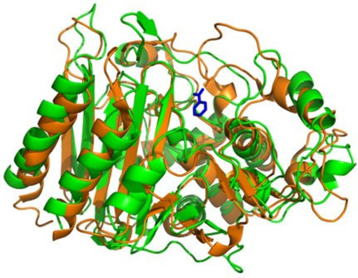 Beta-lactamase. Enzymes are globular protein - clearly visible are the secondary (loops and pleats) and tertiary structures (3d shape)
