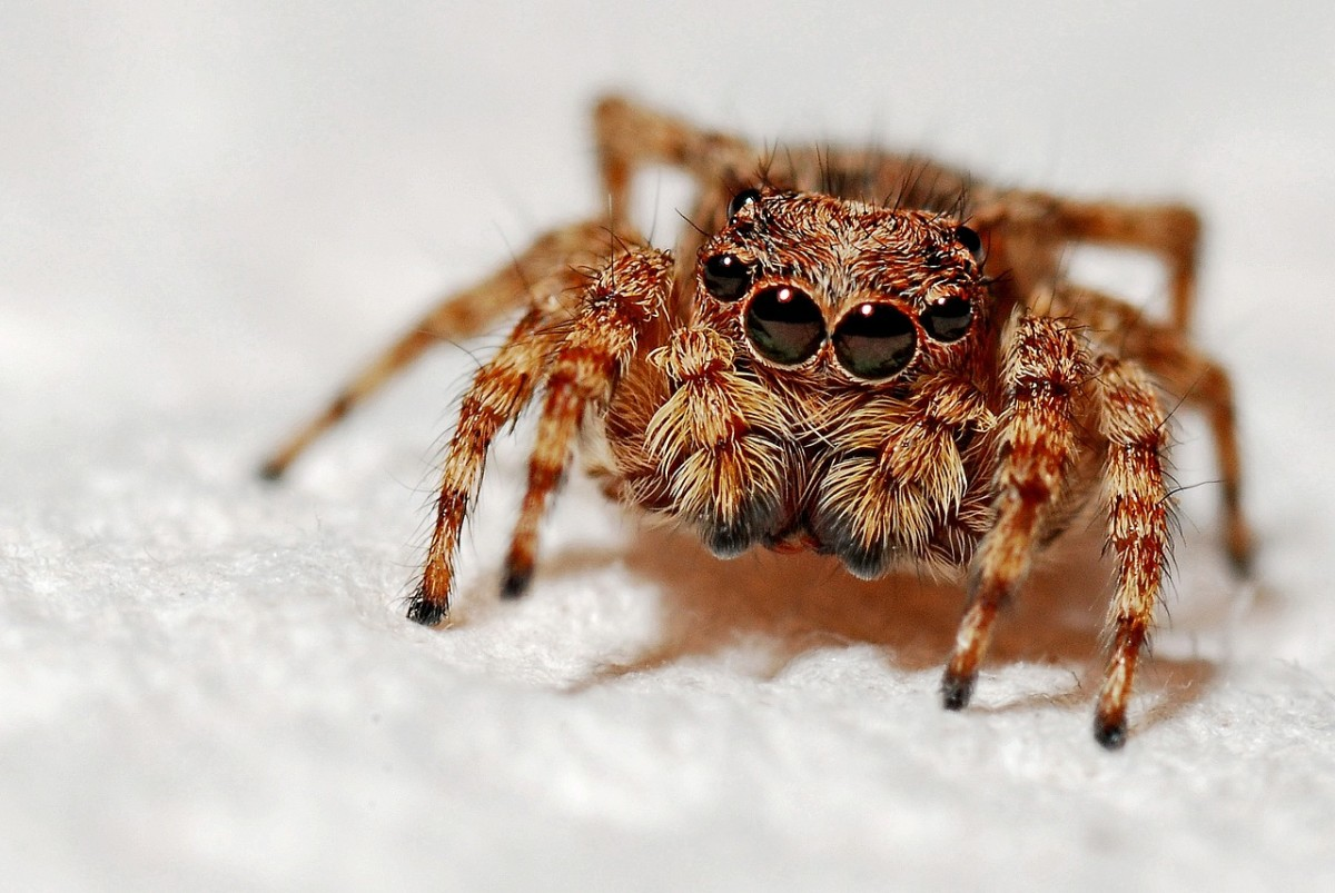 let-spiders-live