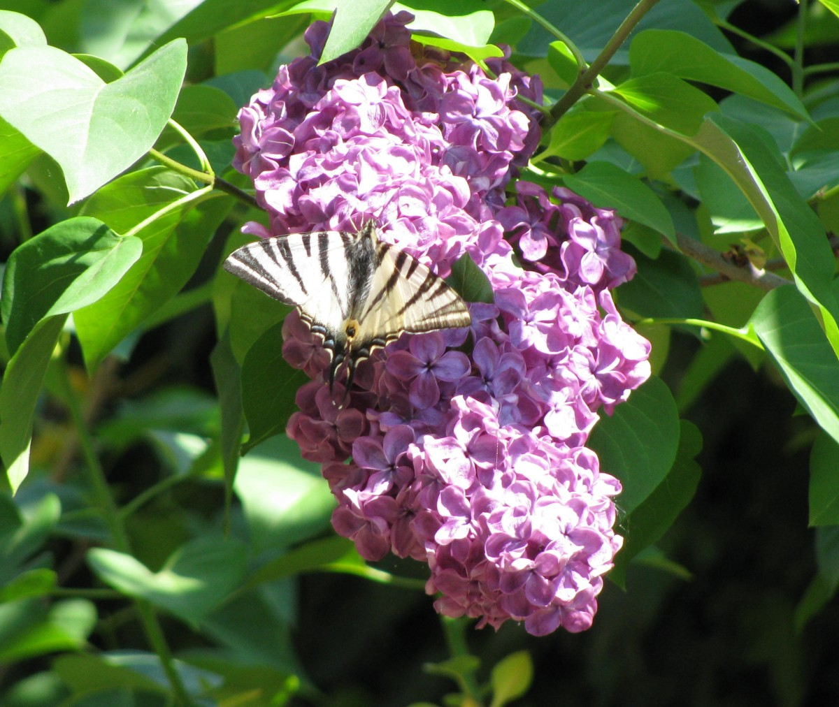 art deco butterfly!