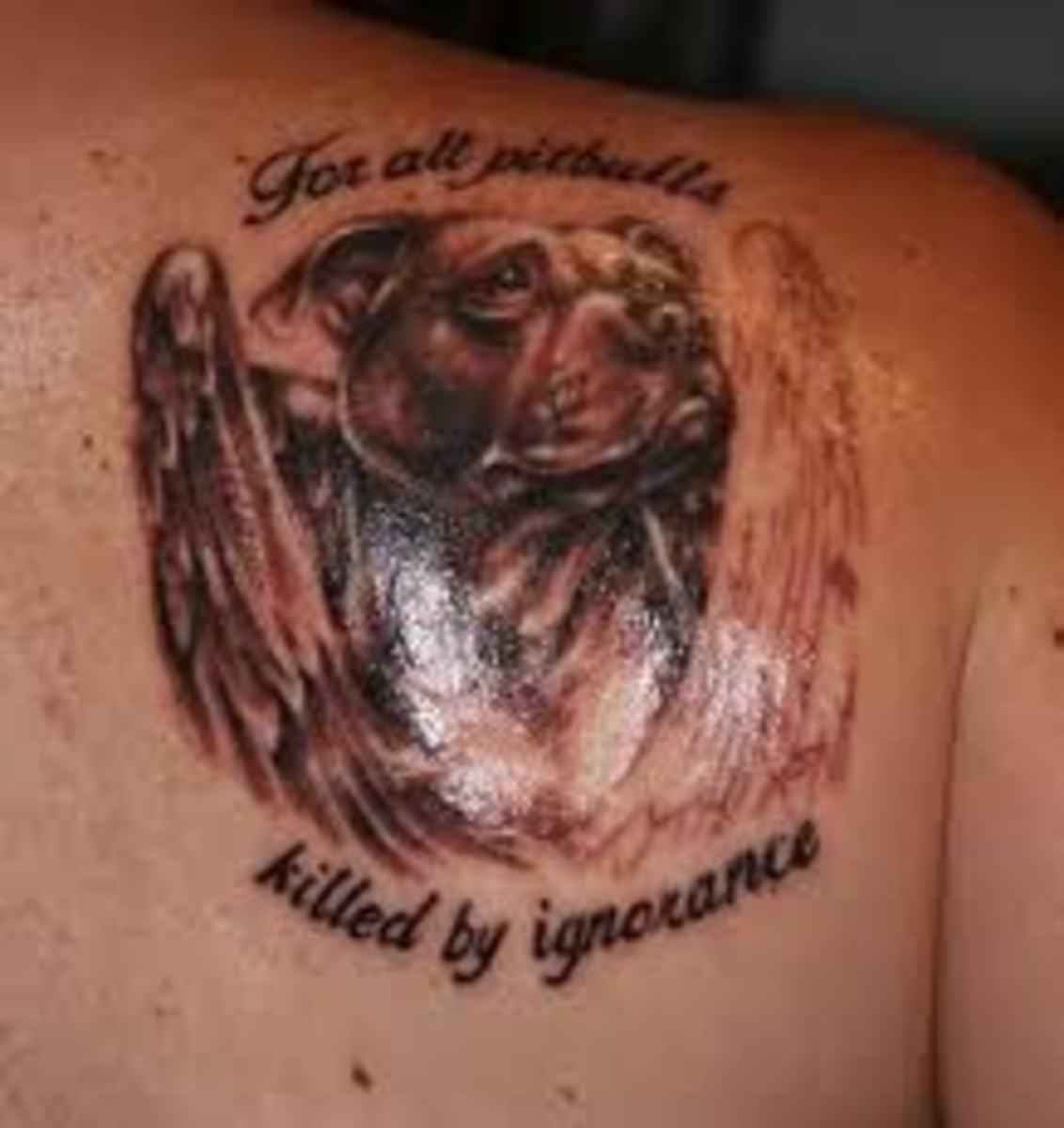 pit-bull-tattoos-and-meanings-pit-bull-tattoo-designs-and-ideas