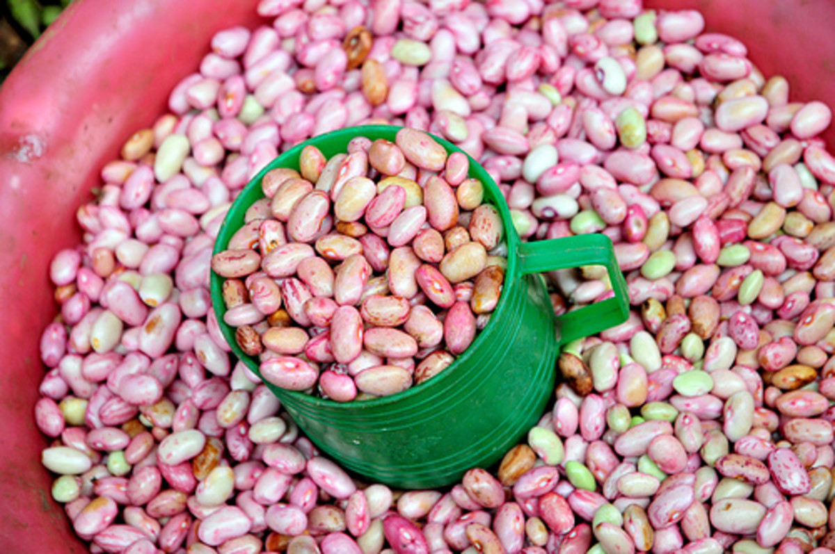 Types of Beans and How to Sort, Soak and Prepare Dry Beans