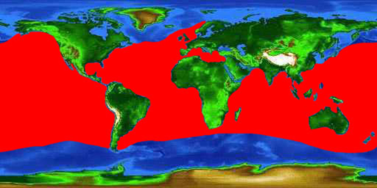 world map showing the distribution of the blue shark