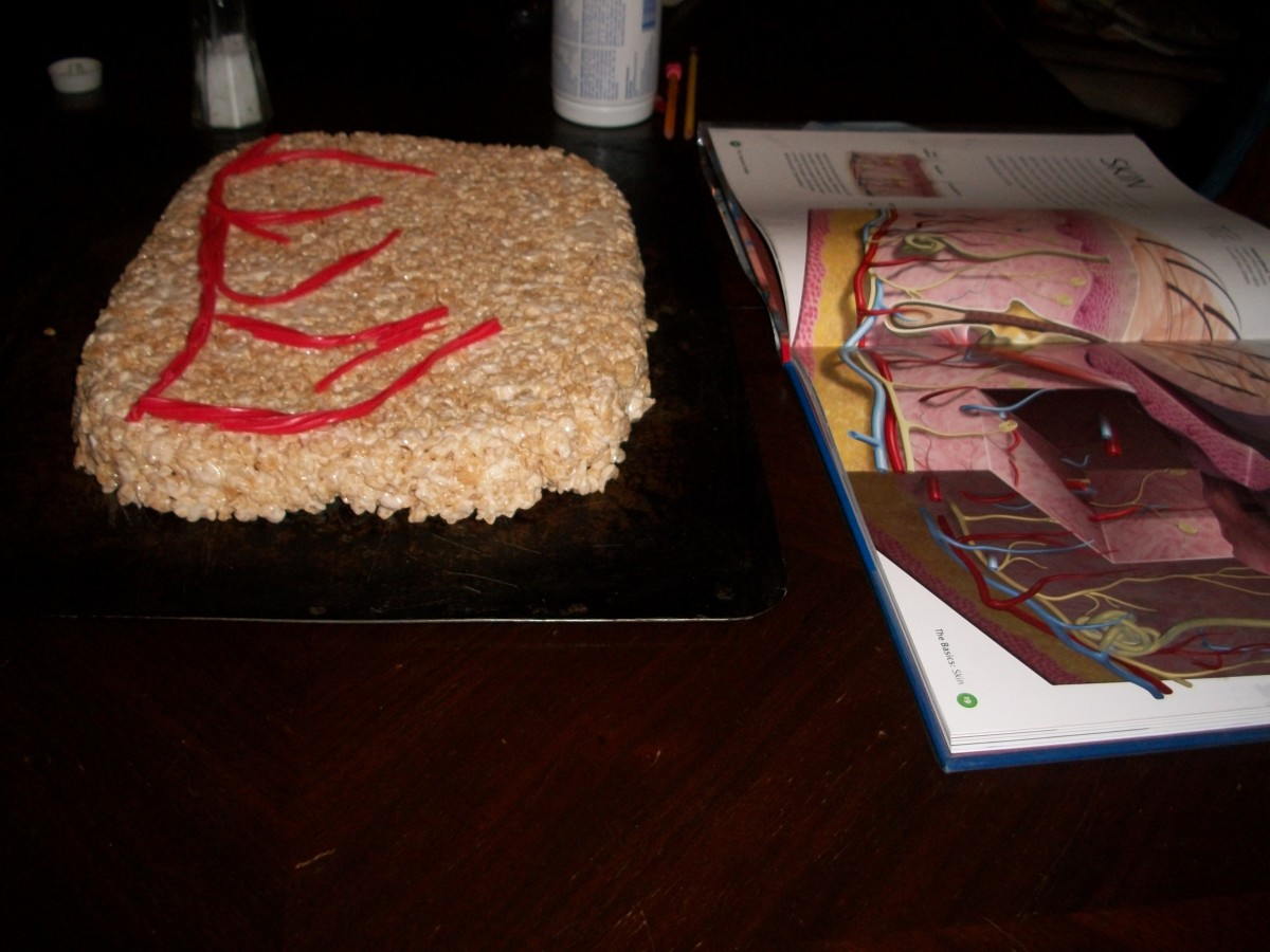 fun-biology-science-project-for-kids-an-edible-skin-model-that-is-made-with-rice-krispie-treats-and-candy