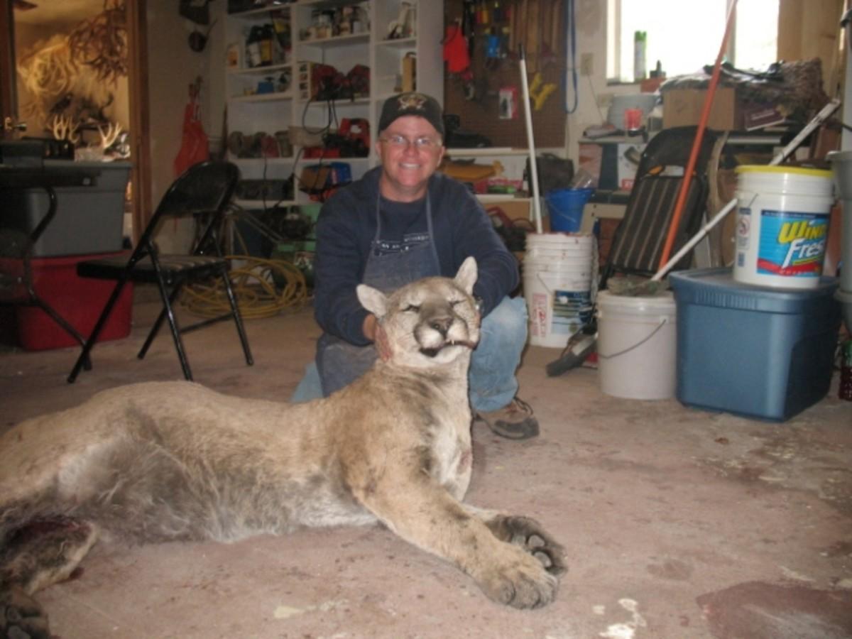 MOUNTAIN LION KILLED IN GEORGIA