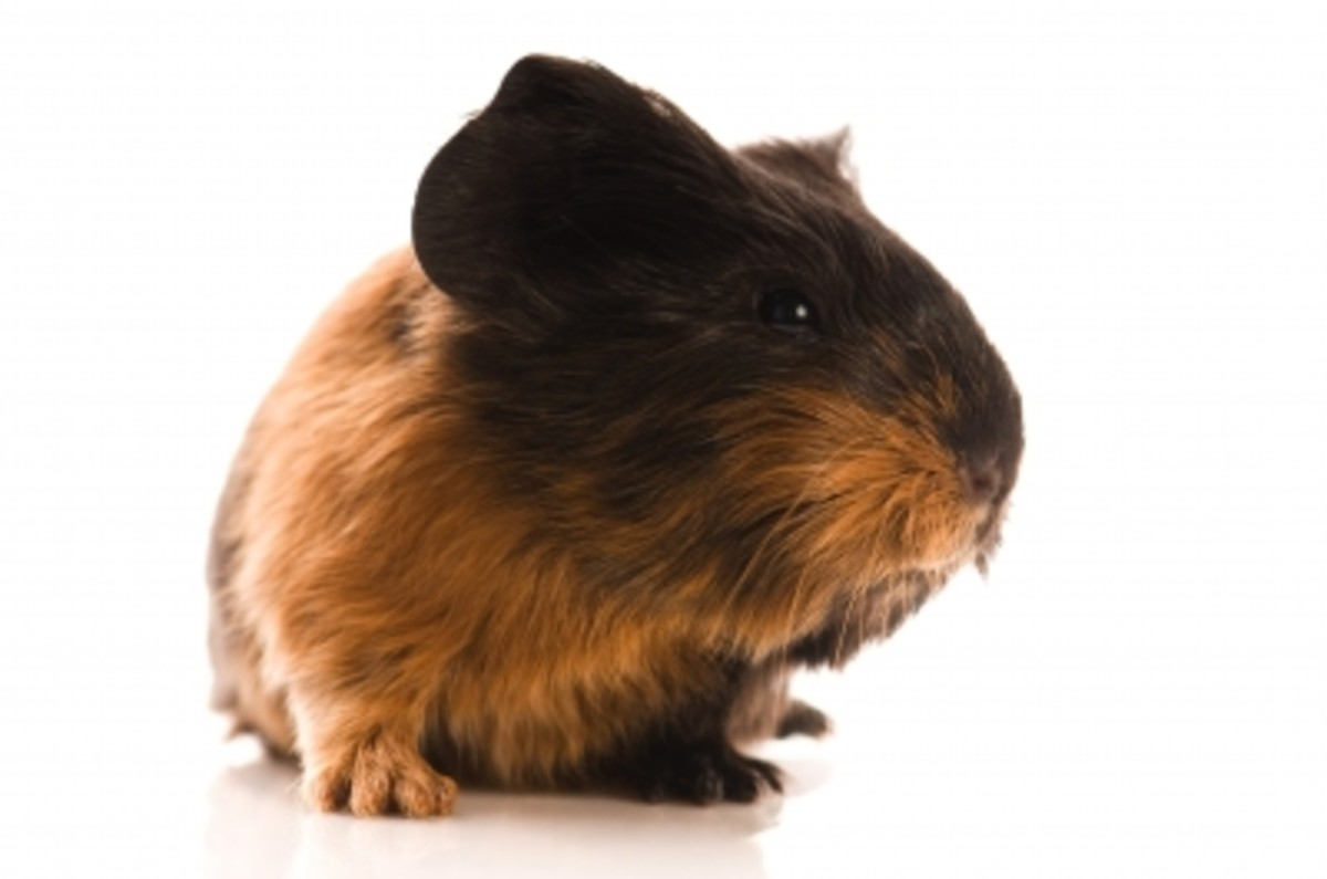 Decide if you are willing to be a guinea pig in an uncontrolled GMO food experiment that is today's food industry.