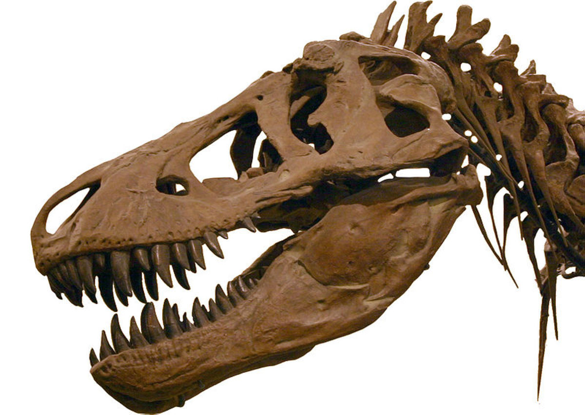 One day we will take our place alongside T-Rex, as one of Earth's extinct animals.