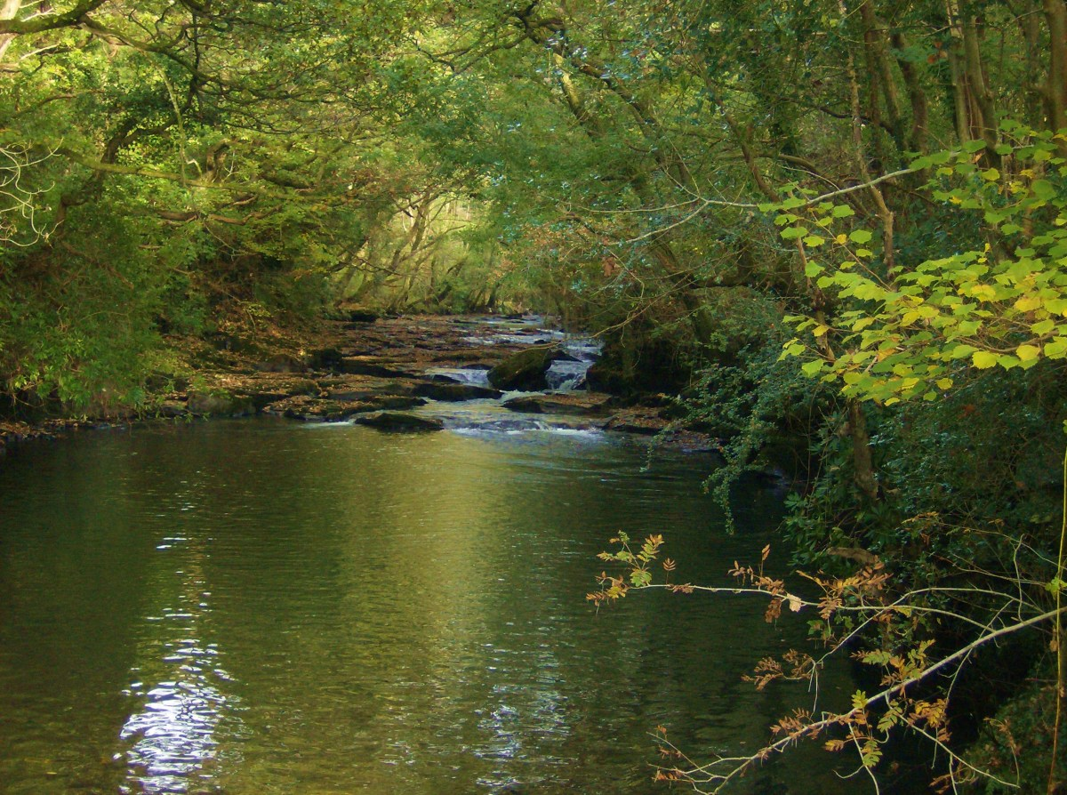 The river running through our site was a wonderful place to take a cooling dip on a hot day.
