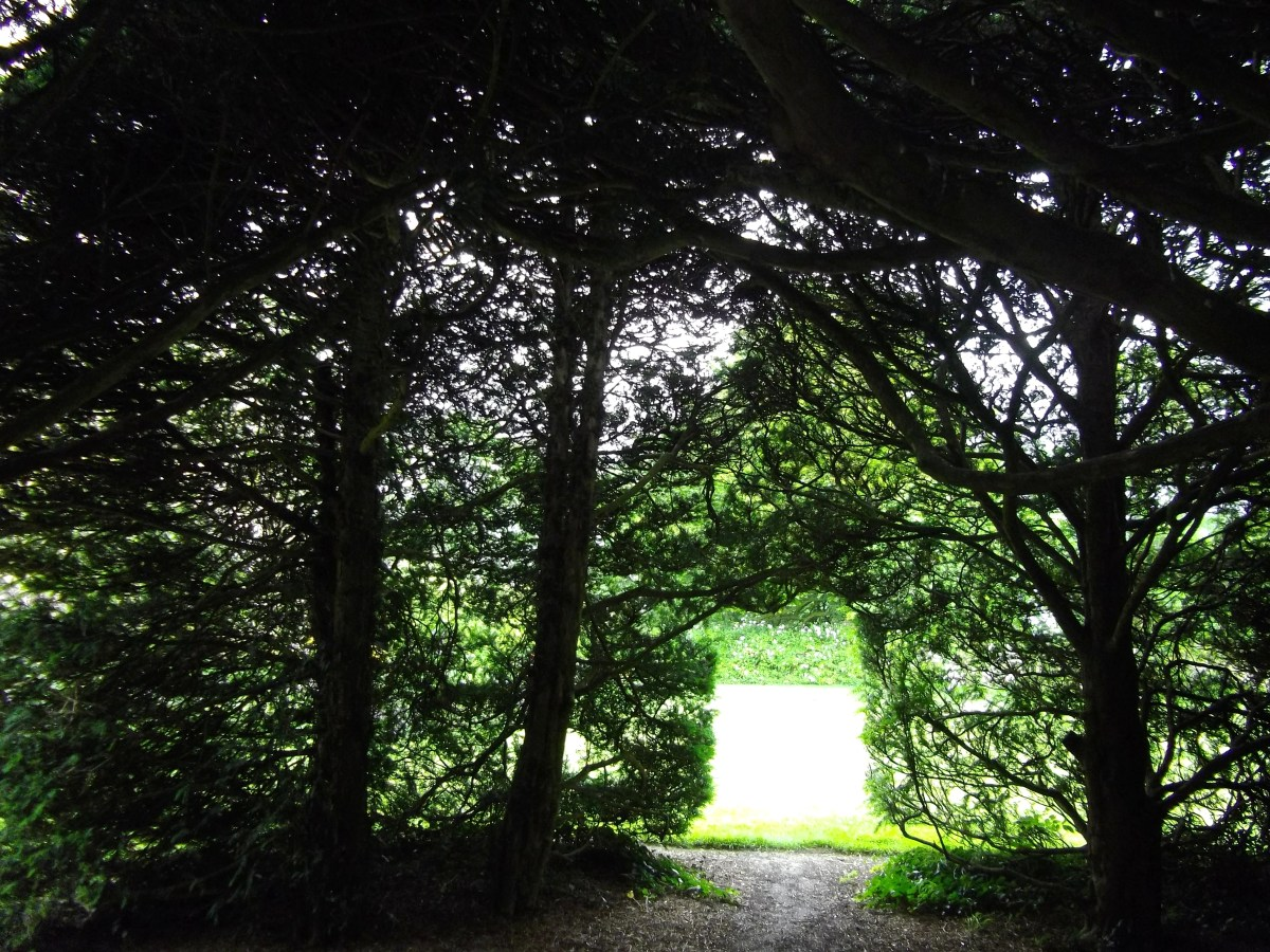 Tunnel of trees with light shining through.