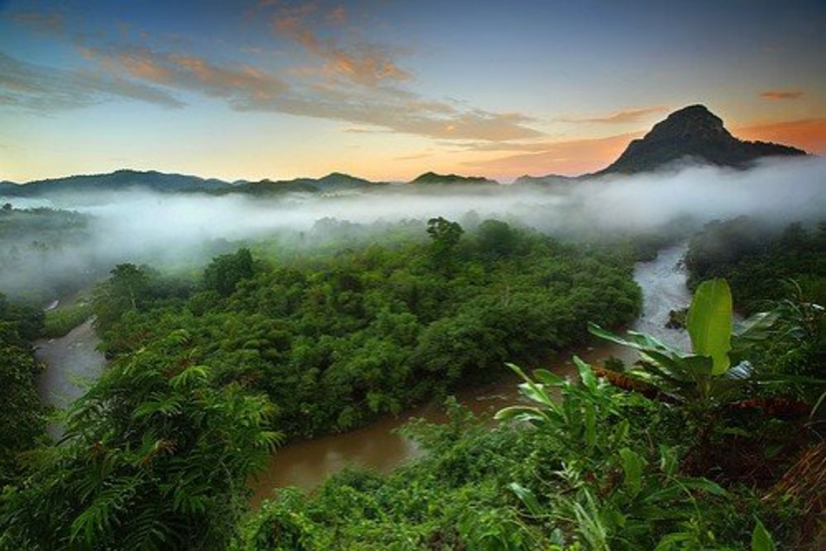 Rainforests recycle moisture and are a major part of the lungs of the earth