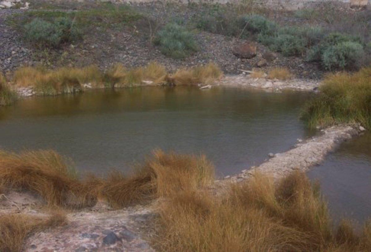 Ponds in Las Galletas. Photo by Steve Andrews