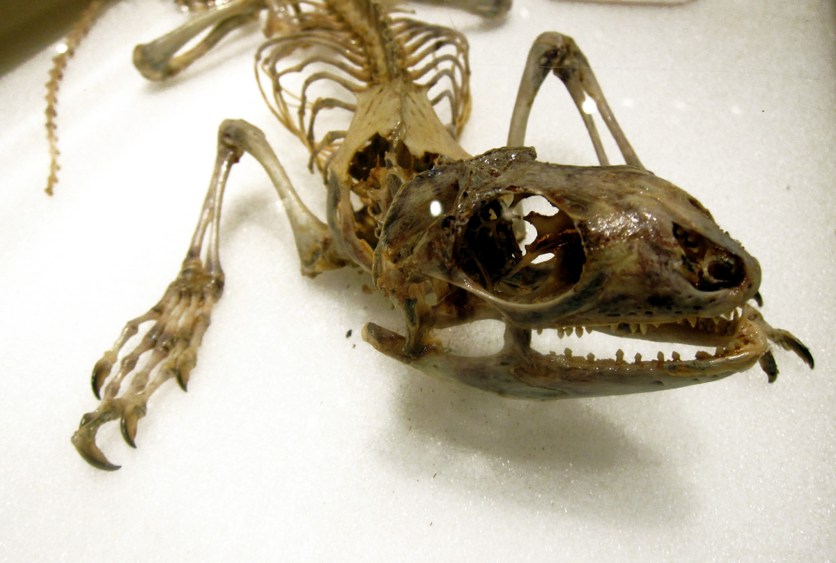The Difference Between Articulation, Taxidermy, and Plastination
