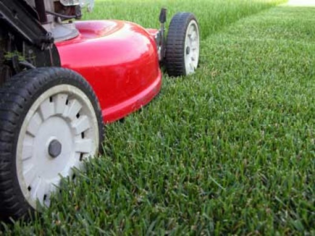 Cutting the lawn isn't for kid anymore, Put your lawn maintenance knowledge to work and make a lucrative full or part time income.