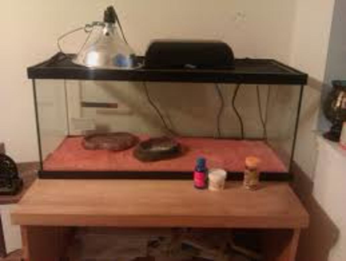 The perfect set up for box/tortoise. 20 Gallon Tank. Light on one end (put the water/food on the opposite end so it doesn't evaporate/wilt) add some décor and an aquarium scene on the back of the tank if you want to add more depth