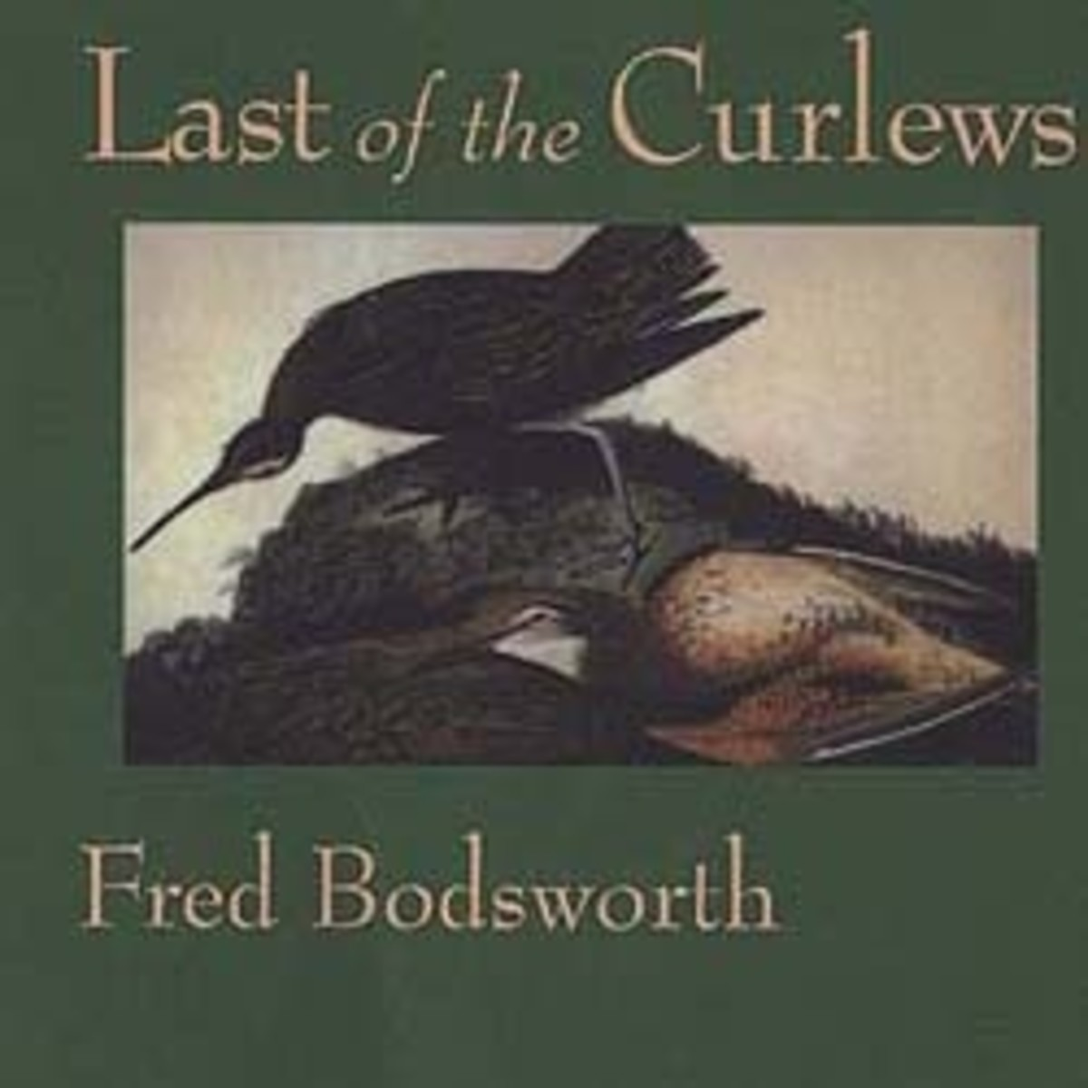 My copy of Last of the Curlews