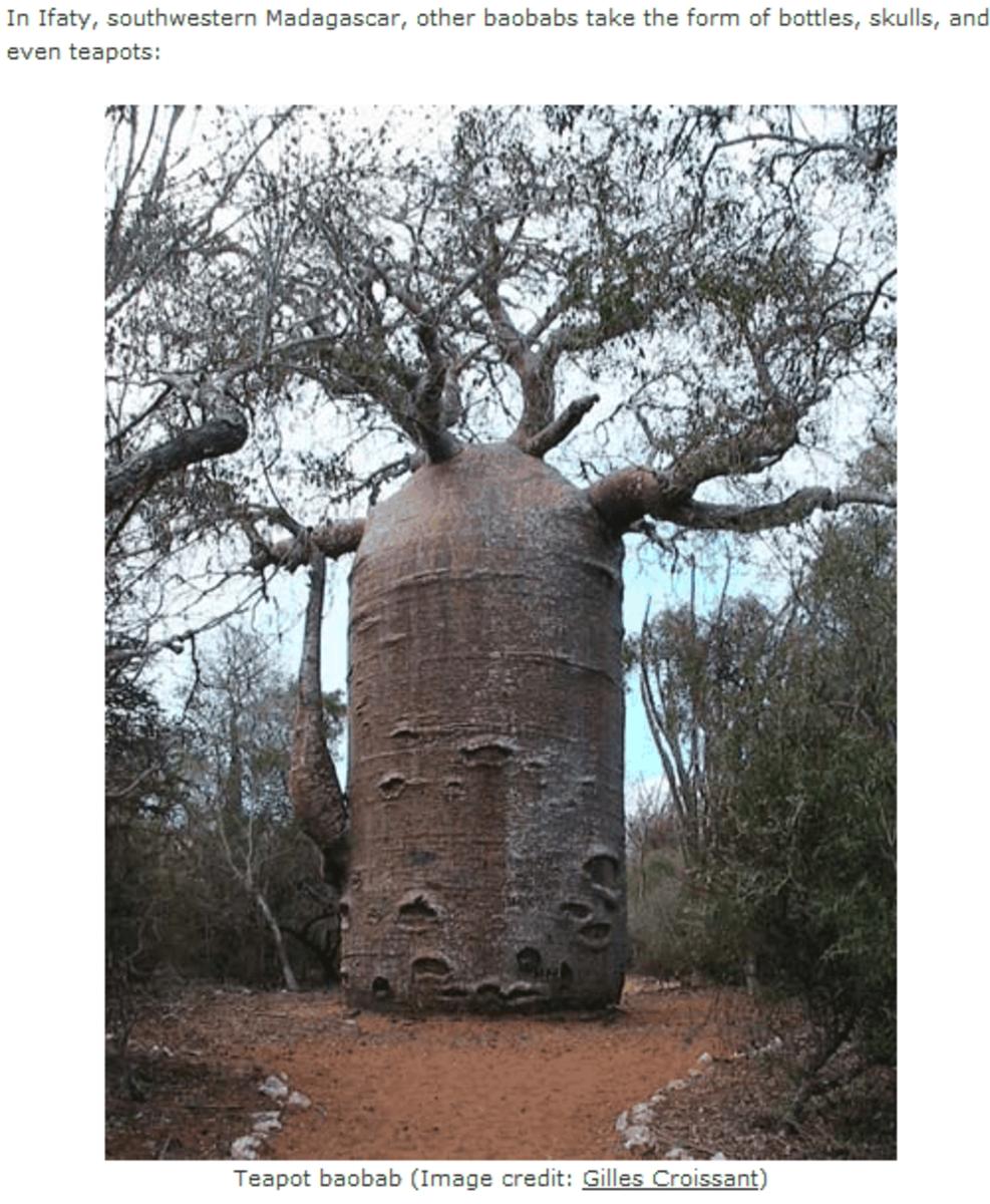 endangered-plants-of-madagascar