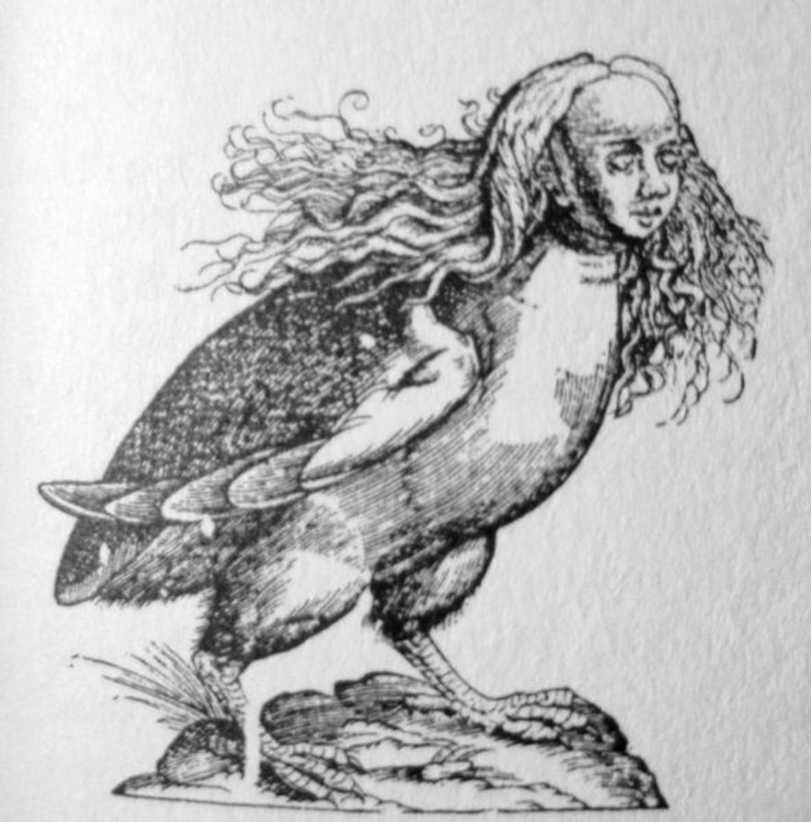 A harpy