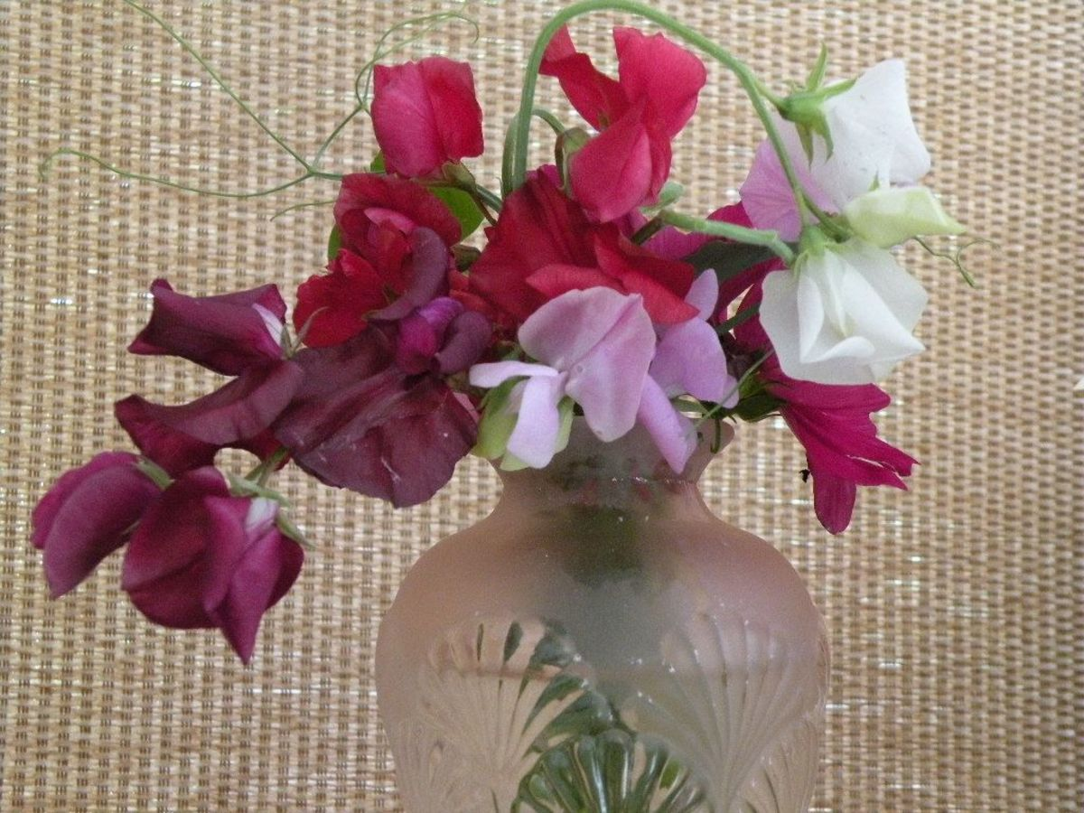 Sweet peas in a vintage Art Deco pink frosted glass vase.
