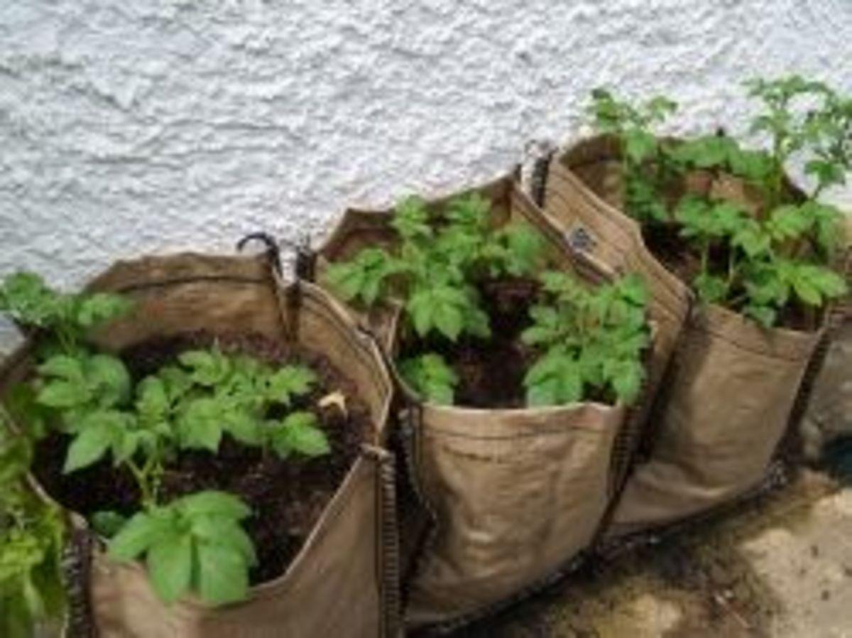 Burlap Gardening