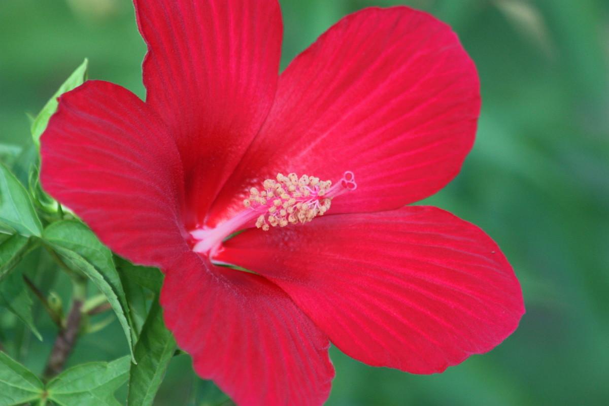 7 Hardy Flowers for Summer Gardens
