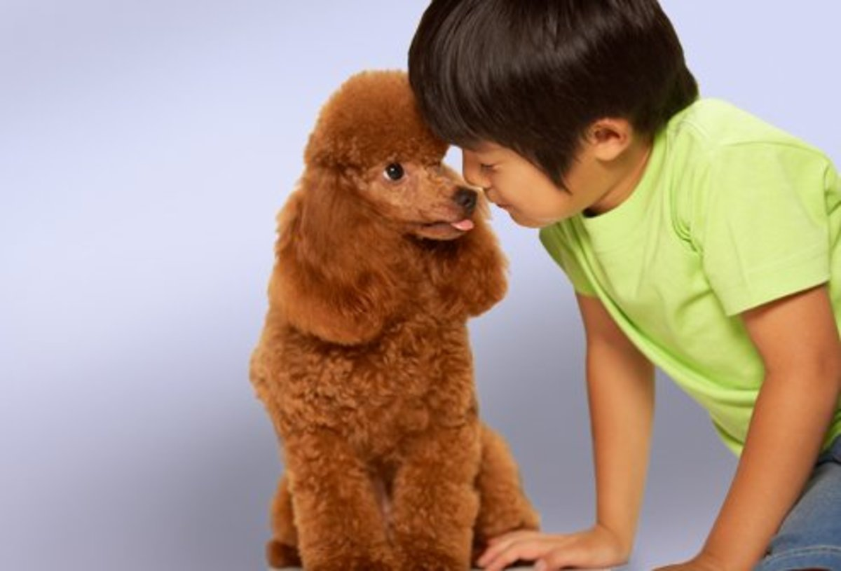 Dogs that are Good with Kids and Don't Shed